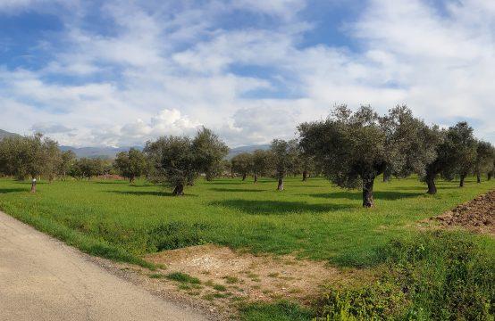 Terreno in trav. San Francesco